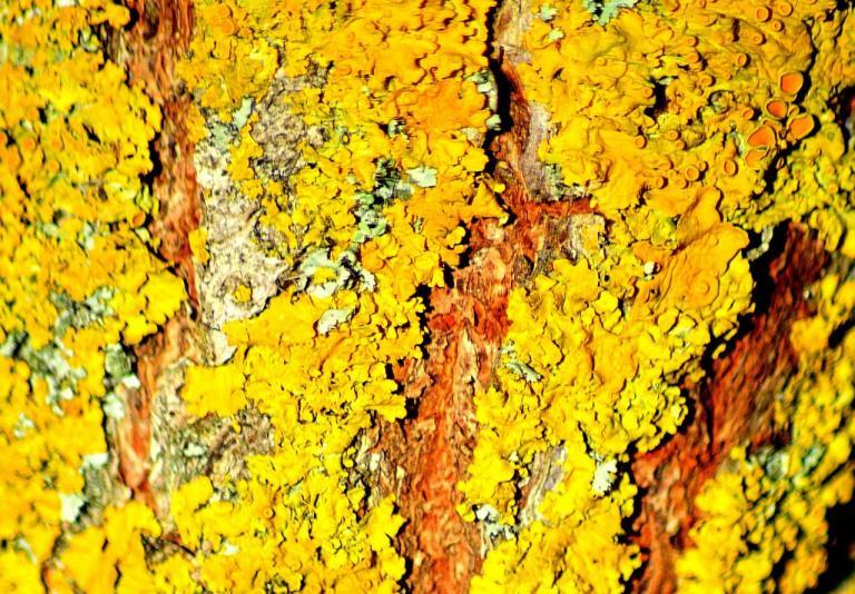 tronc d'arbre (3)