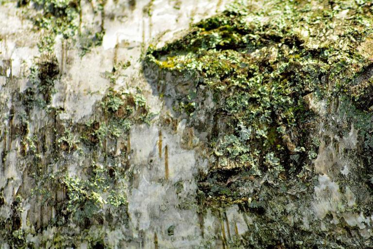 tronc d'arbre (4)